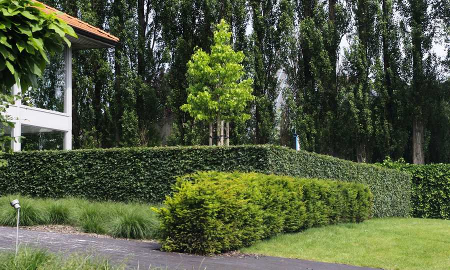 Haagblokken zorgen voor structuur